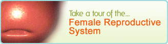 Female Reproductive System Tour