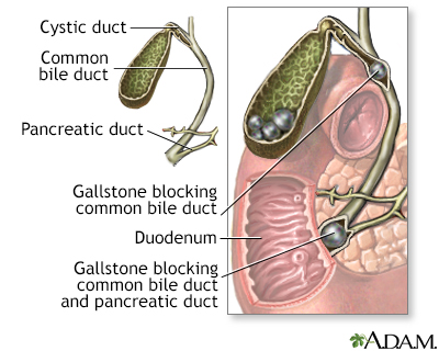 common bile duct anatomy. in the common bile duct
