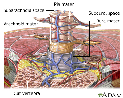 Meninges of the spine - Penn State Hershey Medical Center