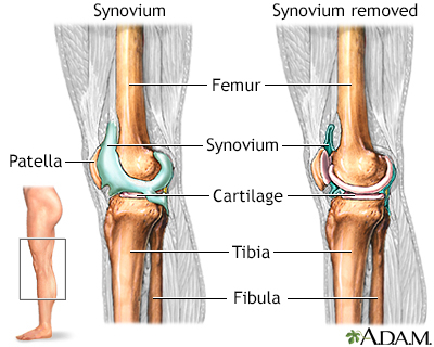 Knee joint penn state hershey medical center knee joint cartilage covers the end of bones in joints to provide shock absorption during movement the synovium is the membrane that surrounds the joint ccuart Choice Image