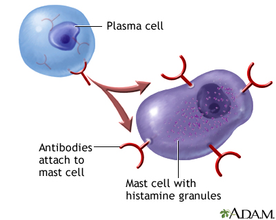 how does the immune system work pdf