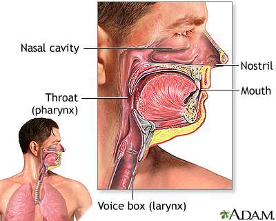 Anatomy and function of the respiratory system penn state hershey when you breathe in through your nose or mouth the air is filtered through natural lines of defense that protect against illness and irritation of the ccuart Gallery