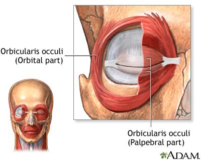 Eye muscles - Penn State Hershey Medical Center