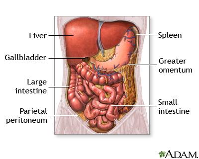 Abdominal organs - Penn State Hershey Medical Center