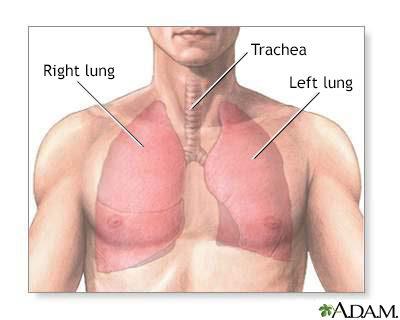 Normal Lung Anatomy Penn State Hershey Medical Center