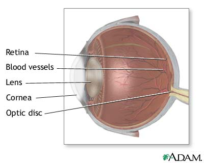 Lateral eye anatomy