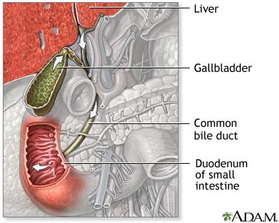 Digestive System Information